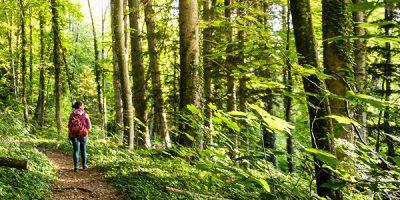 Eine junge Frau wandert durch einen saftig-grünen Mischwald