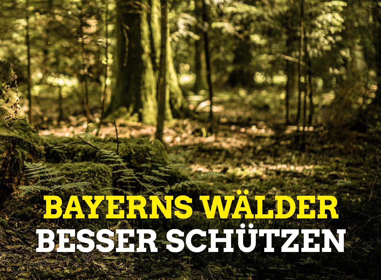 Bayerns Wälder besser schützen