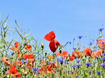 Blumenwiese_Volksbegehren Artenvielfalt