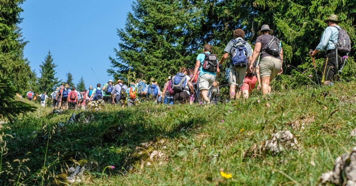 Impression von der Hauptalmbegehung 2018: Eine lange Reihe Menschen wandert bei bestem Wetter durch luftigen Bergwald.
