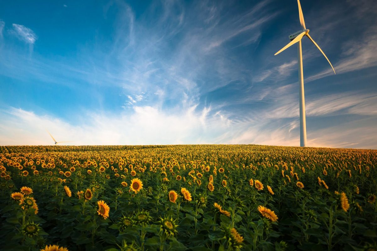 Ein Windrad steht inmitten eines Sonnenblumenfeldes, die Szene ist in Abendlicht getaucht