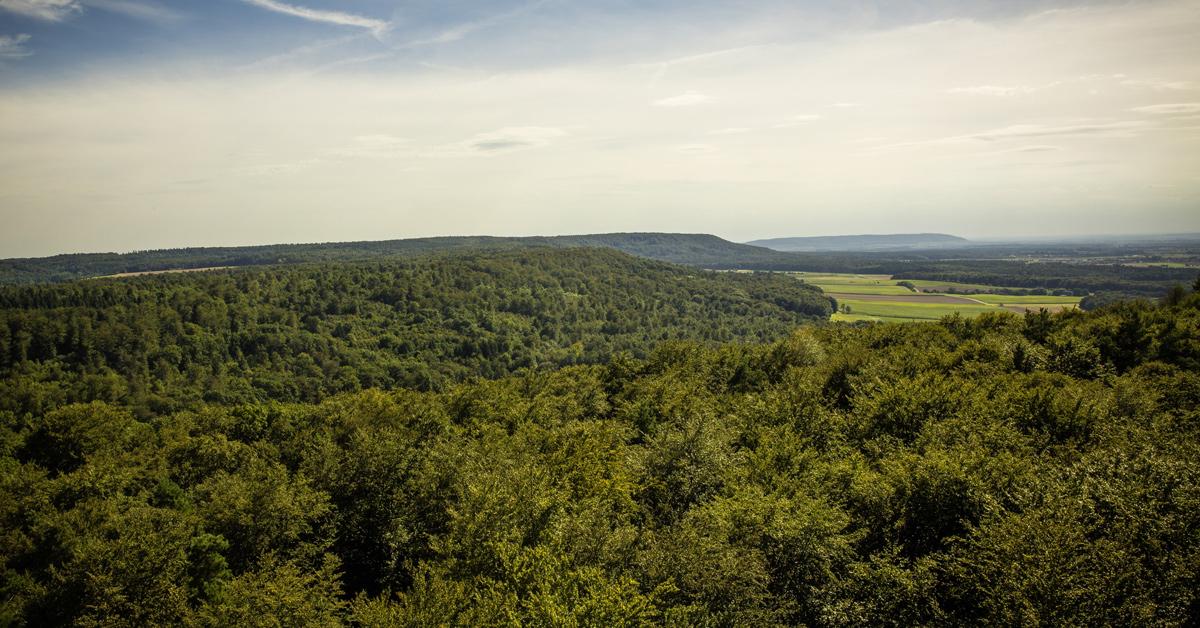 Blick über den Steigerwald