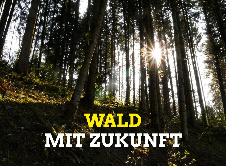 Die Sonne scheint durch eine Reihe von Waldbäumen
