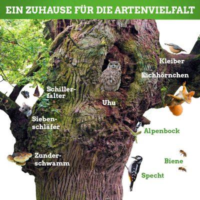 Zuhause für die Artenvielfalt