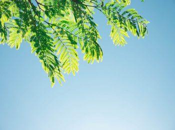 Blick nach oben in einen blauen Himmel und die sonnenbeschienenen Blätter eines Baumes